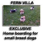 Fern Villa: Small Dog Home Boarding.
